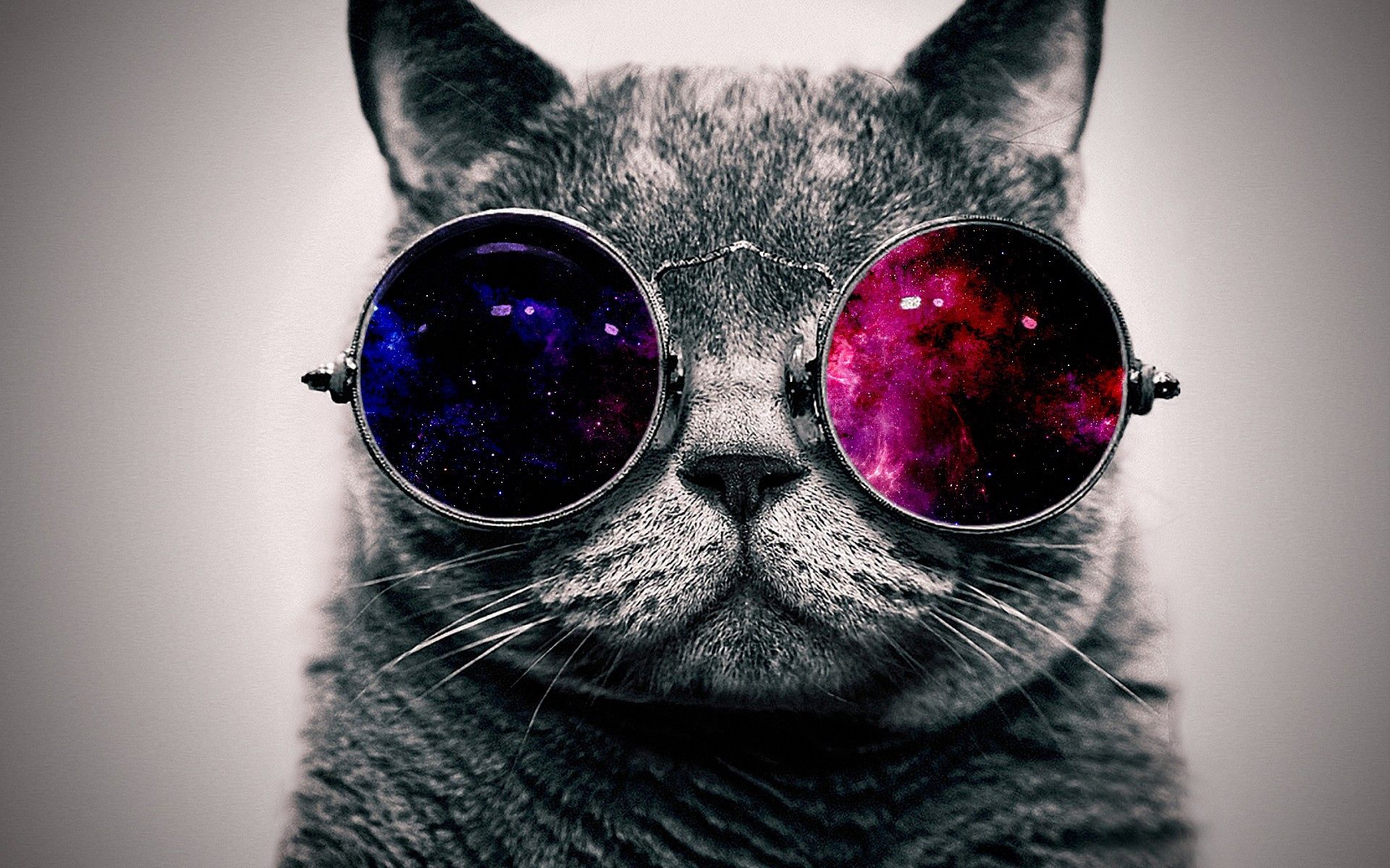 152021 download wallpaper Muzzle, Animals, Cat, Fat, Thick, Glasses, Spectacles screensavers and pictures for free