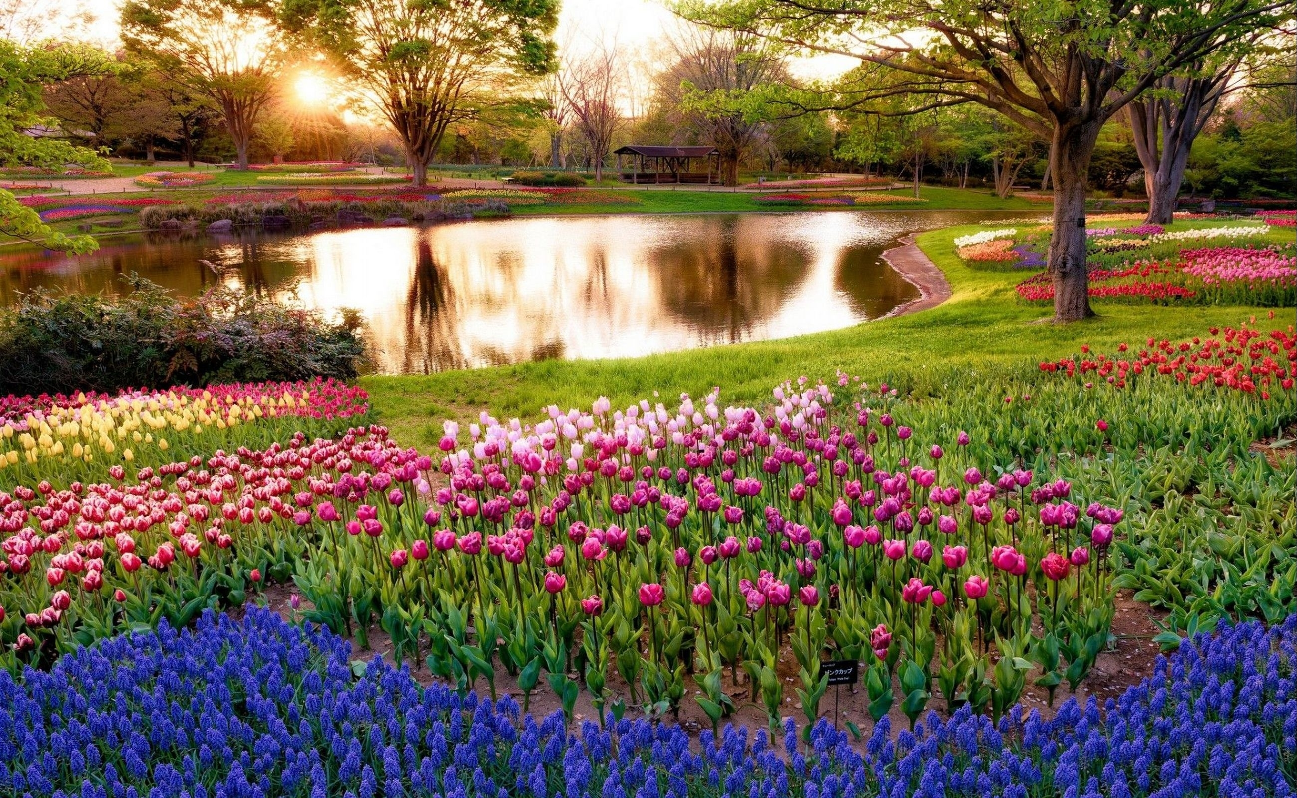 86667 Screensavers and Wallpapers Flower Bed for phone. Download Nature, Tulips, Lake, Flower Bed, Flowerbed pictures for free