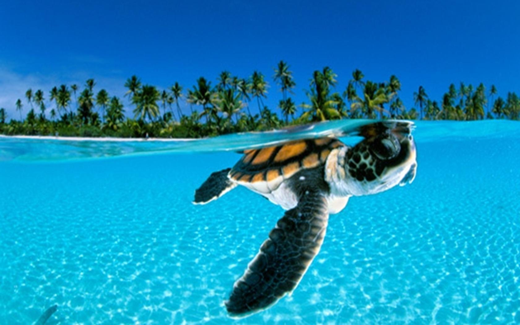 18065 скачать обои Животные, Черепахи, Море, Пляж, Пальмы - заставки и картинки бесплатно