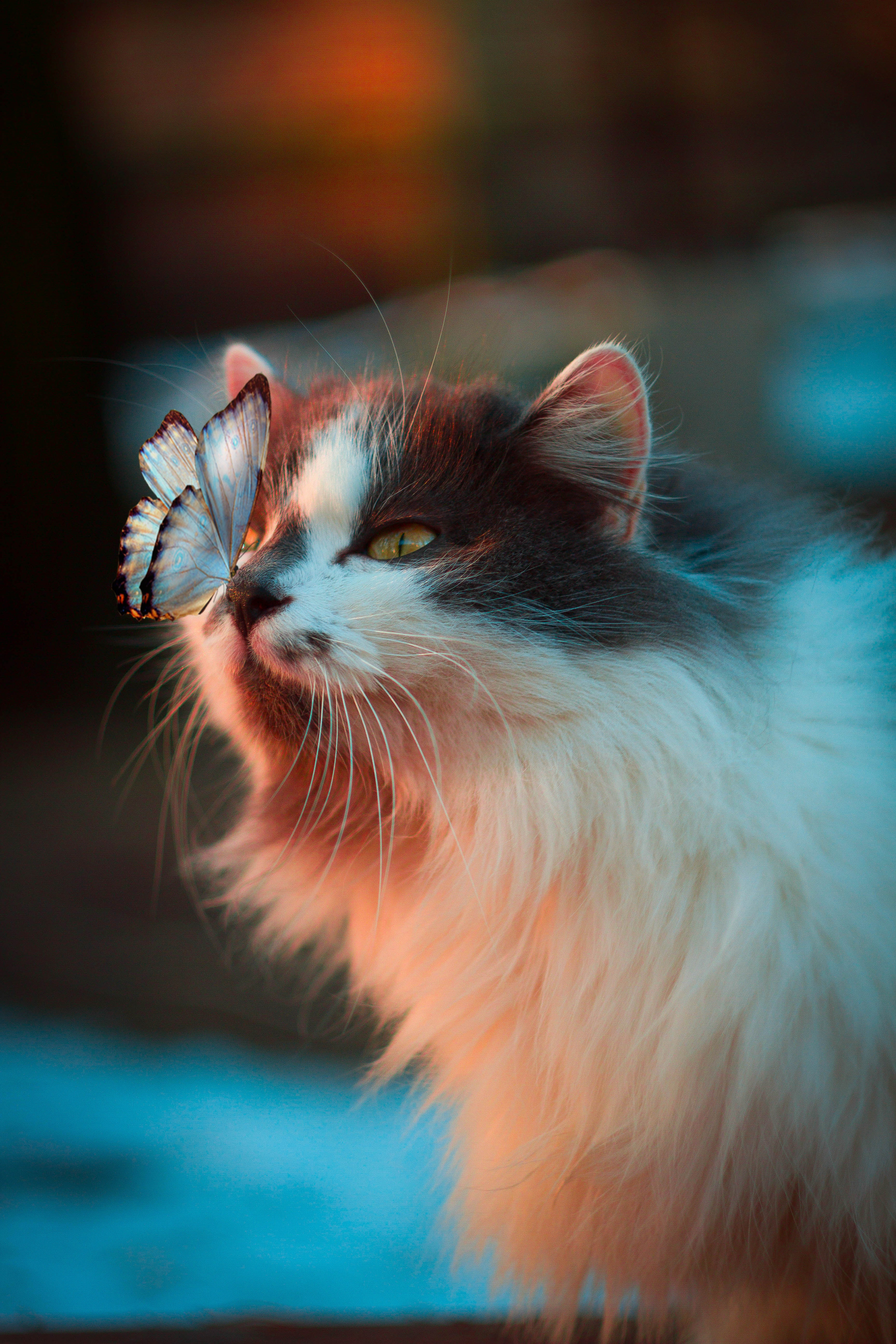 131837 Screensavers and Wallpapers Butterfly for phone. Download Animals, Cat, Fluffy, Butterfly, Tenderness pictures for free