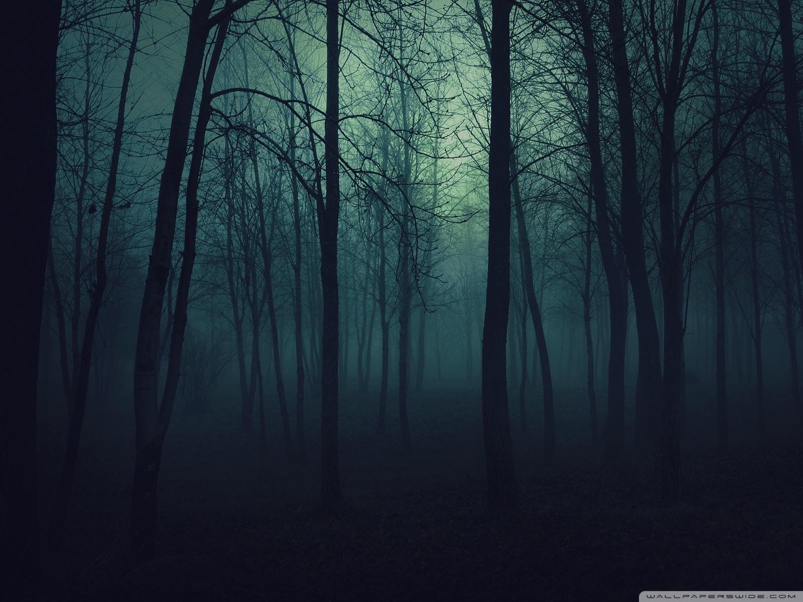 20878 скачать обои Пейзаж, Деревья, Ночь - заставки и картинки бесплатно