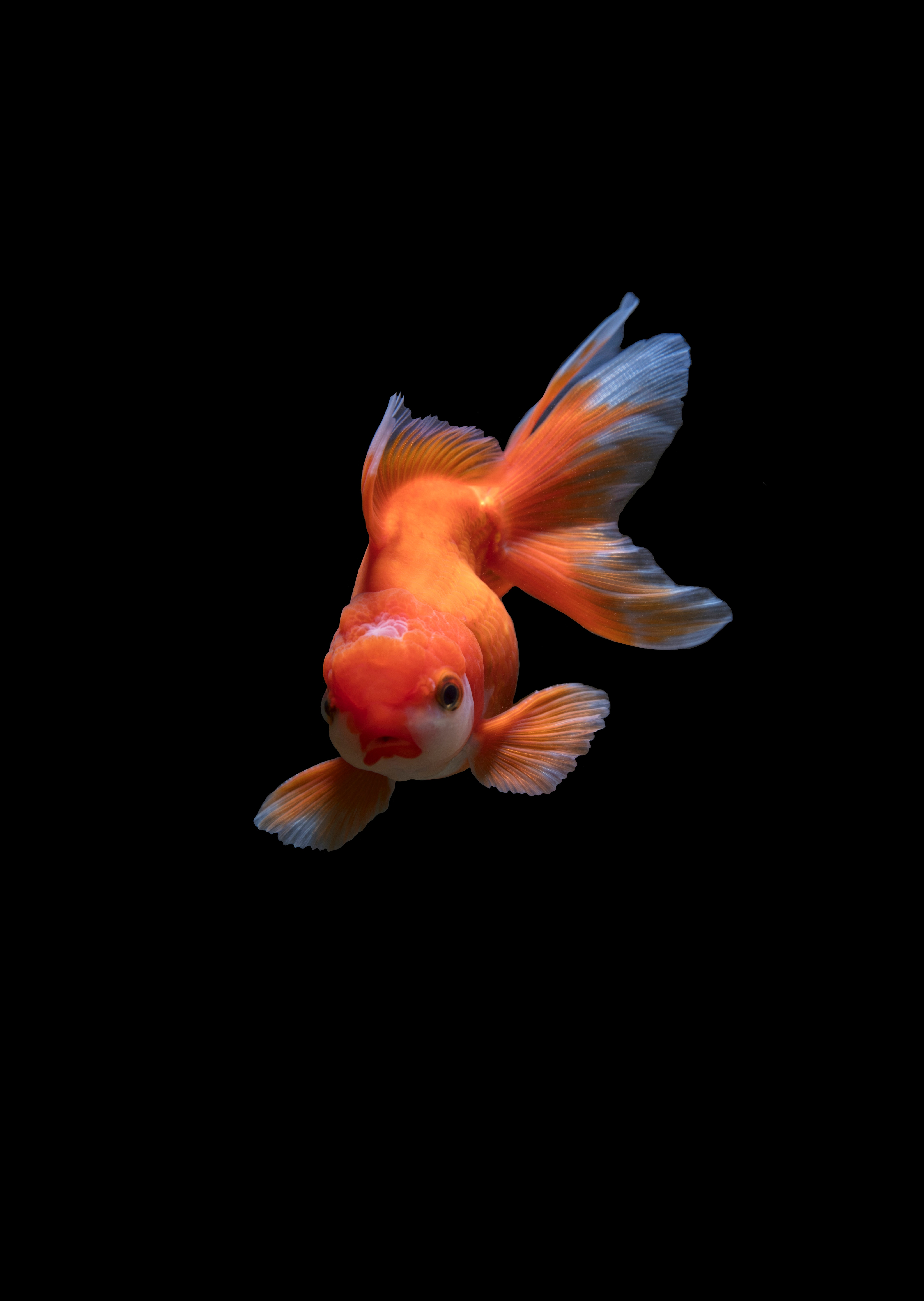 92570 download wallpaper Animals, Underwater World, To Swim, Swim, Small Fish, Fishy screensavers and pictures for free