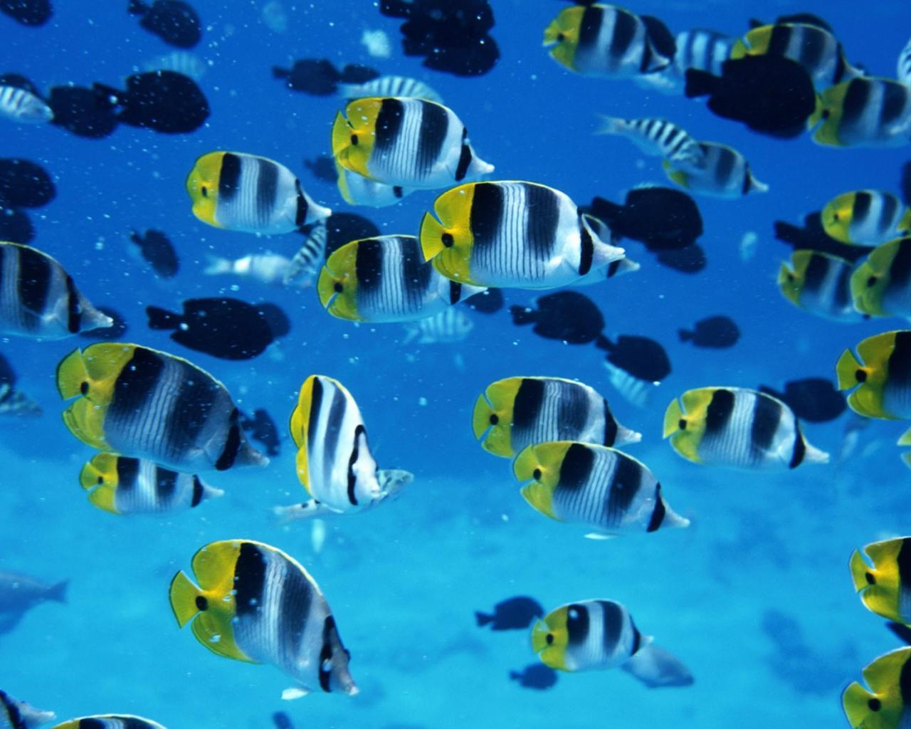 20647 download wallpaper Animals, Sea, Fishes screensavers and pictures for free
