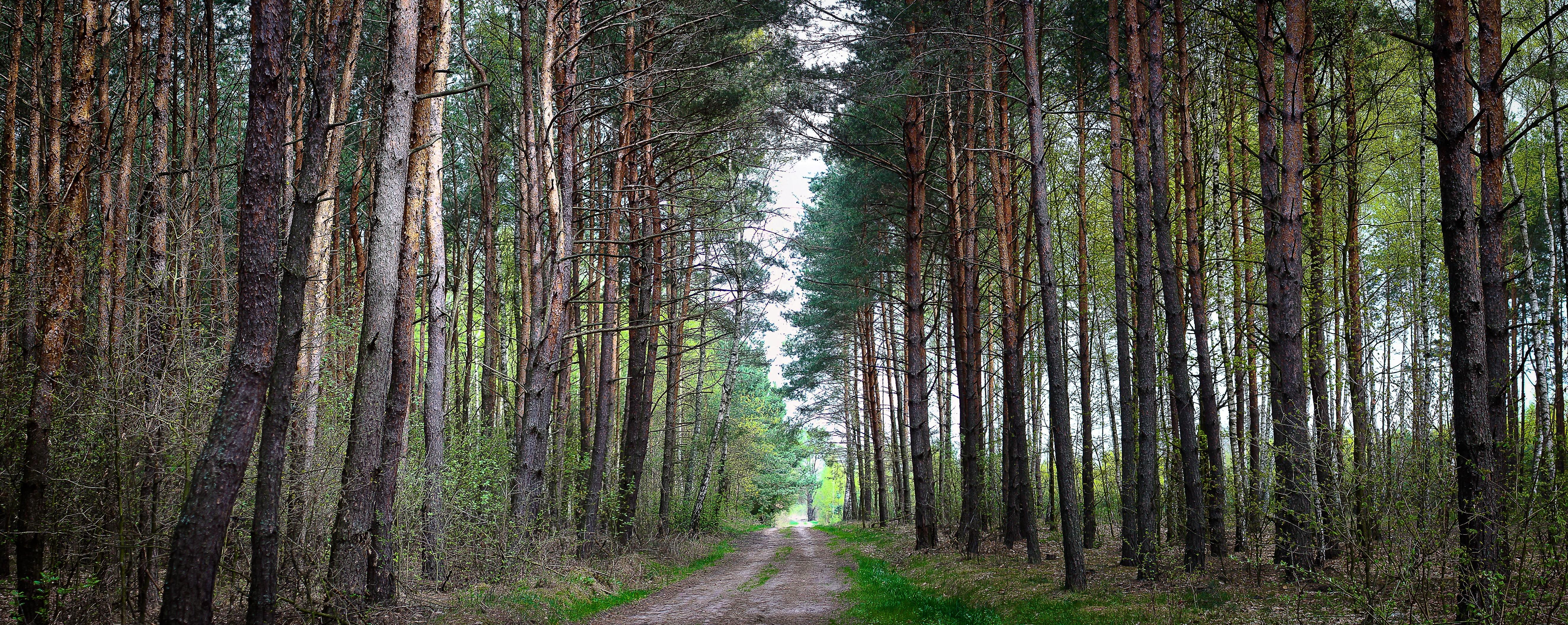 Скачать картинку Пейзаж, Лес, Природа, Дорога в телефон бесплатно.
