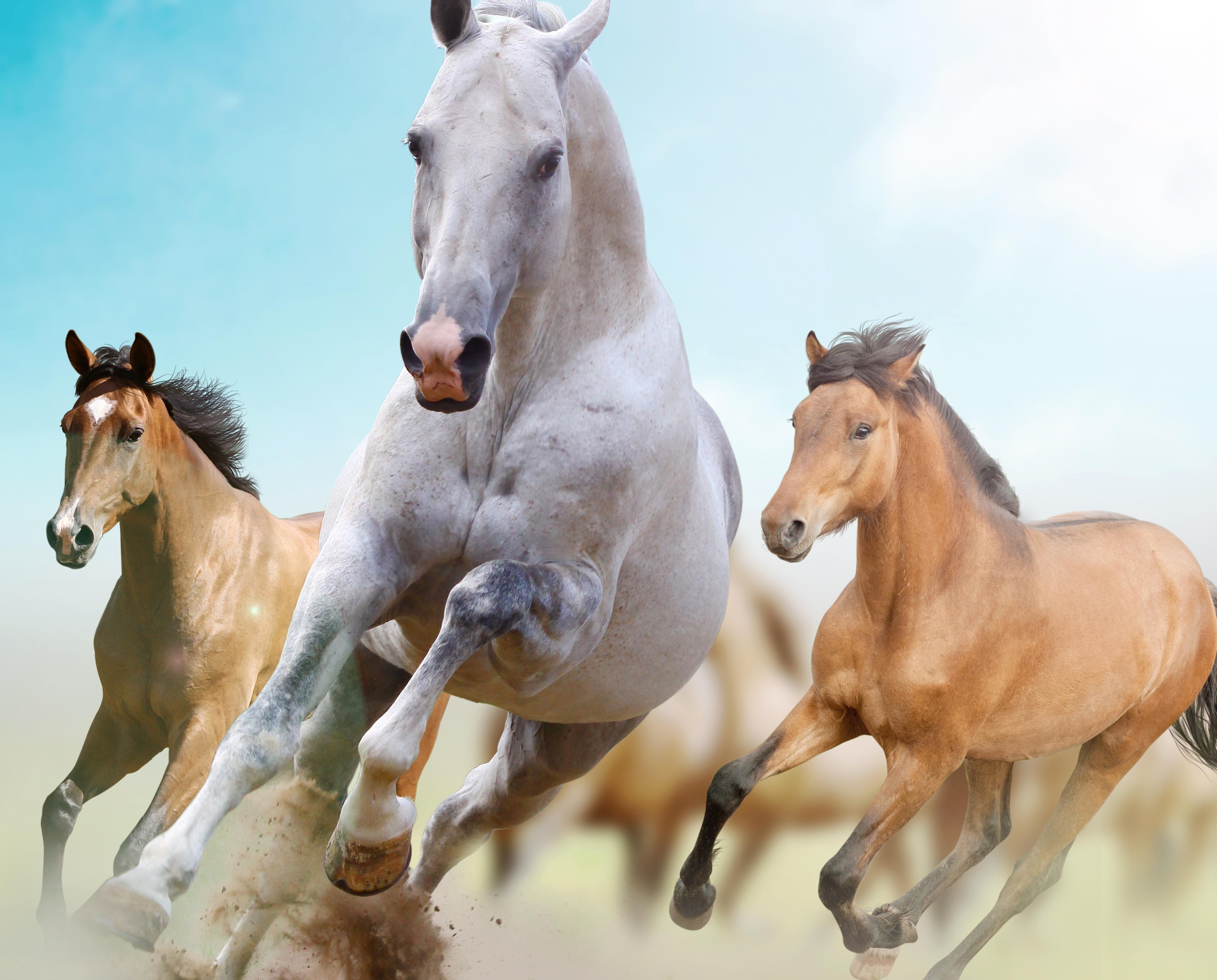 91651 скачать обои Животные, Лошади, Бег, Свобода - заставки и картинки бесплатно