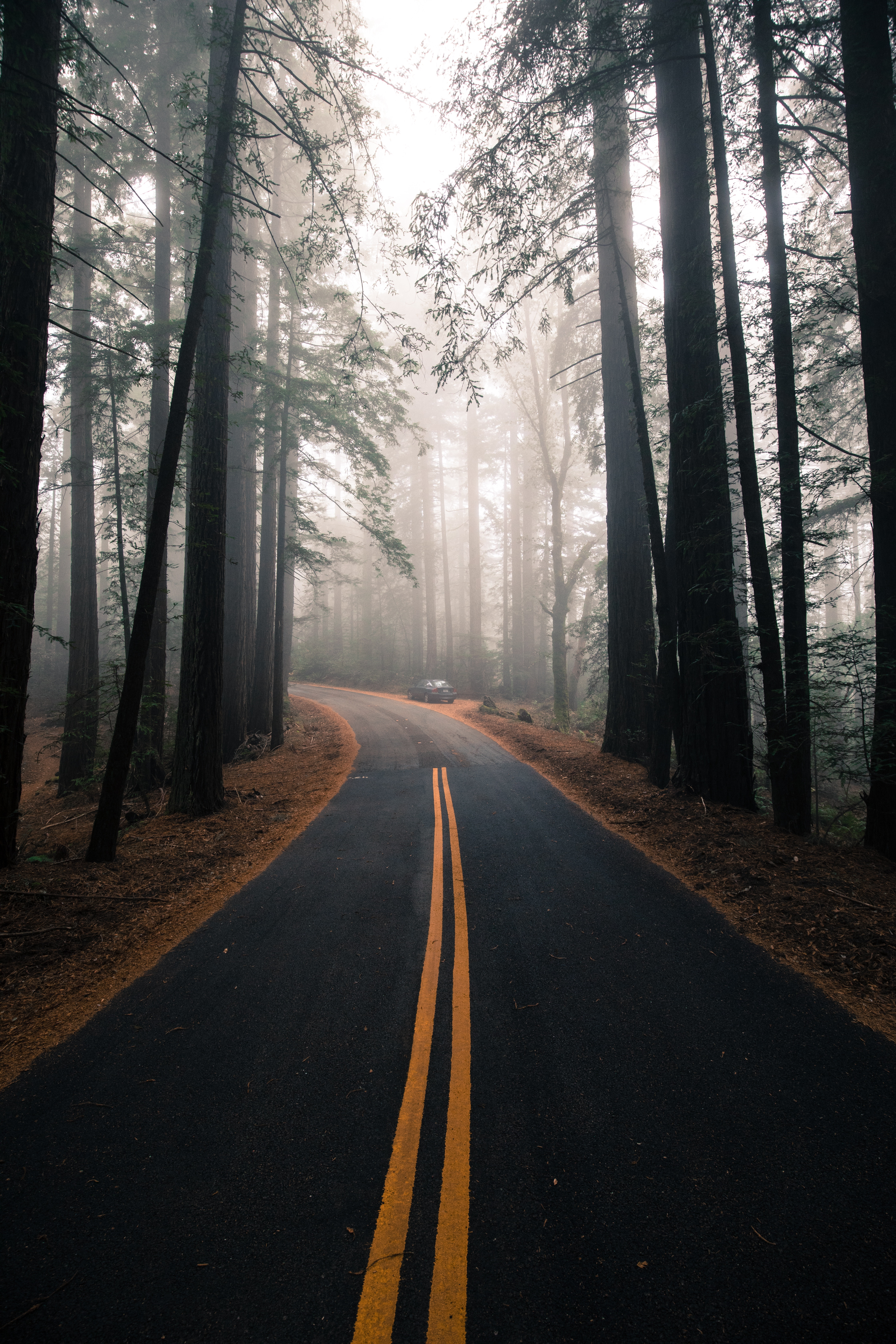 133927 Заставки и Обои Дорога на телефон. Скачать Лес, Дорога, Природа, Деревья, Разметка, Туман картинки бесплатно