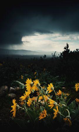 53919 télécharger le fond d'écran Fleurs, Plantes, Dahl, Distance, Plutôt Nuageux, Couvert, Tournesols - économiseurs d'écran et images gratuitement
