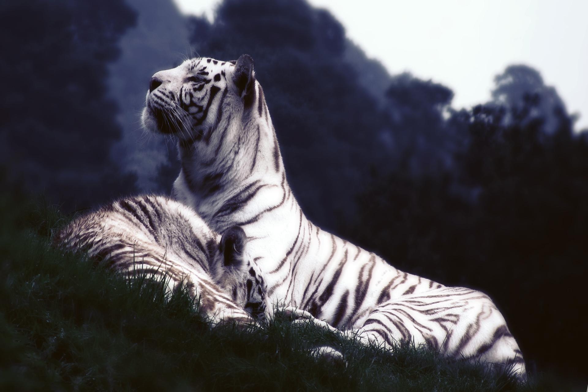 119783壁紙のダウンロード動物, 睡眠, 夢, 草, 阪神タイガース-スクリーンセーバーと写真を無料で