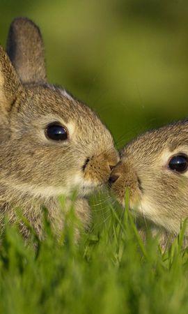 25037 скачать обои Животные, Кролики - заставки и картинки бесплатно