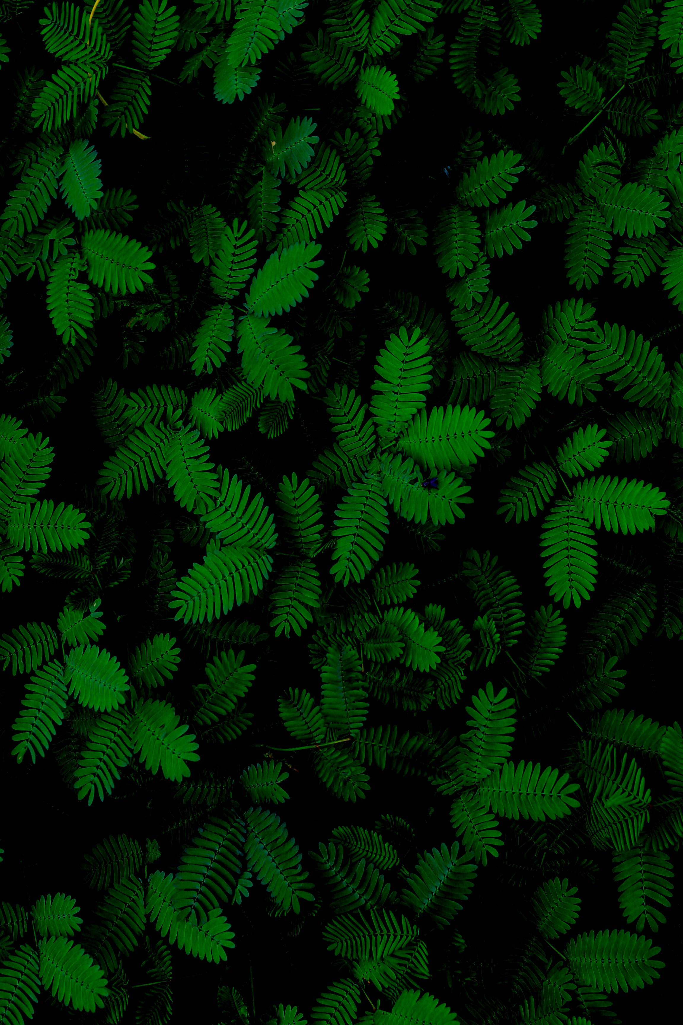 155922 download wallpaper Close-Up, Plants, Nature, Leaves screensavers and pictures for free