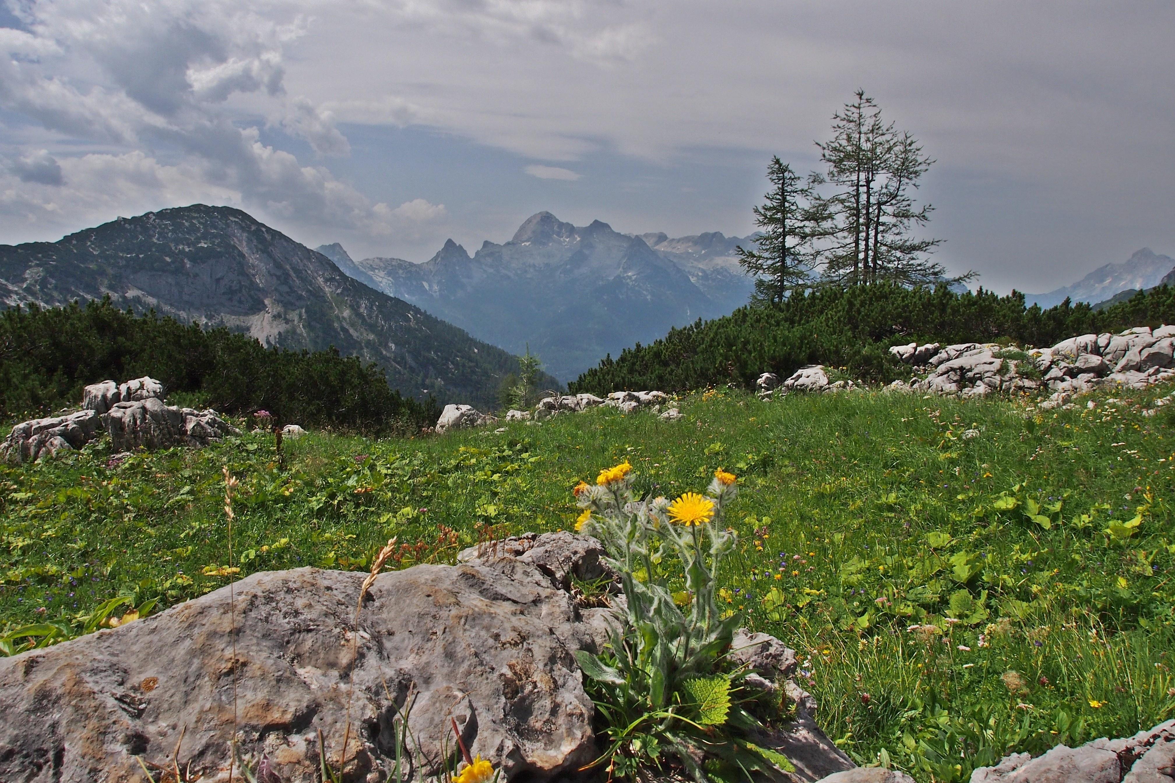 156416 скачать обои Природа, Скалы, Деревья, Горы, Пейзаж - заставки и картинки бесплатно