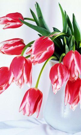 6264 скачать обои Растения, Цветы, Тюльпаны, Букеты, 8 Марта - заставки и картинки бесплатно