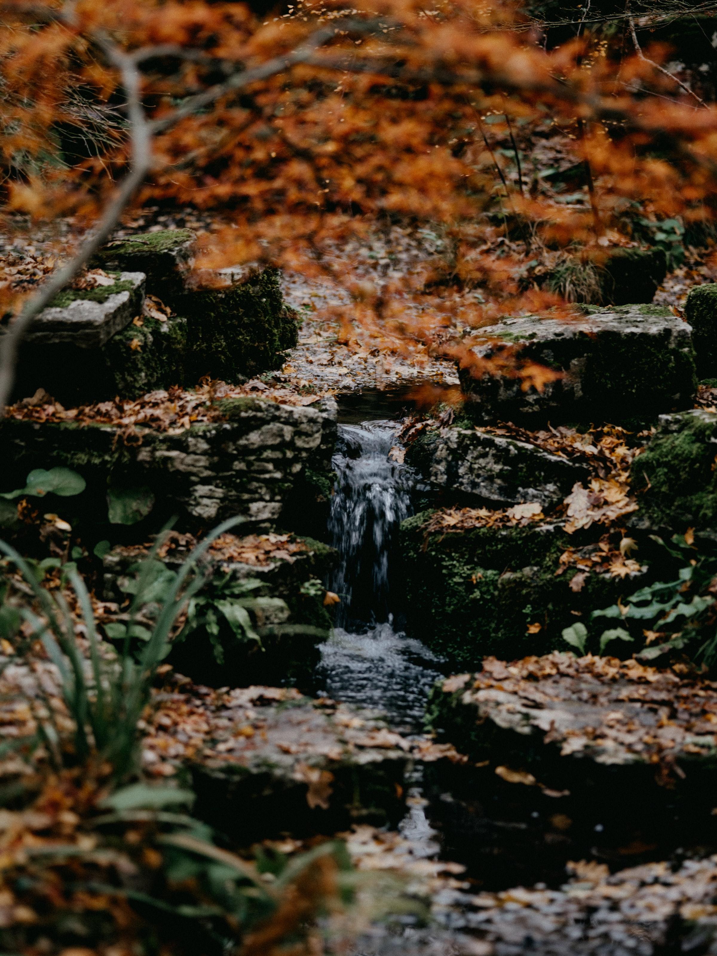 101737 скачать обои Природа, Ручей, Камни, Вода, Трава, Мох - заставки и картинки бесплатно
