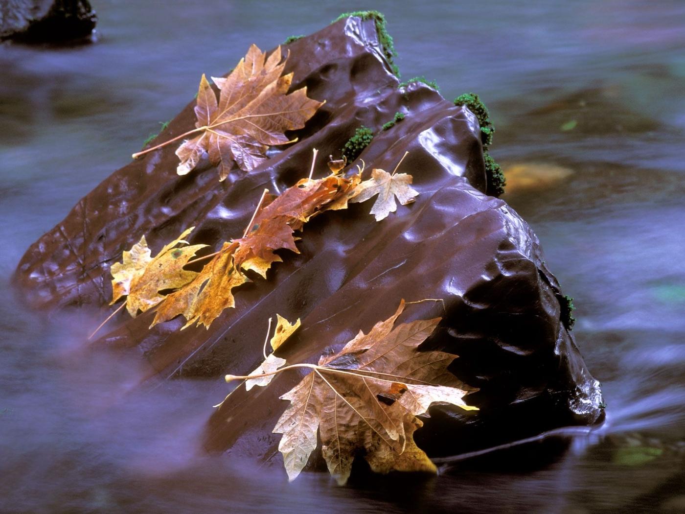 29184 скачать обои Пейзаж, Река, Осень, Листья - заставки и картинки бесплатно
