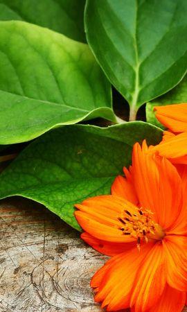 21362 скачать обои Растения, Цветы - заставки и картинки бесплатно