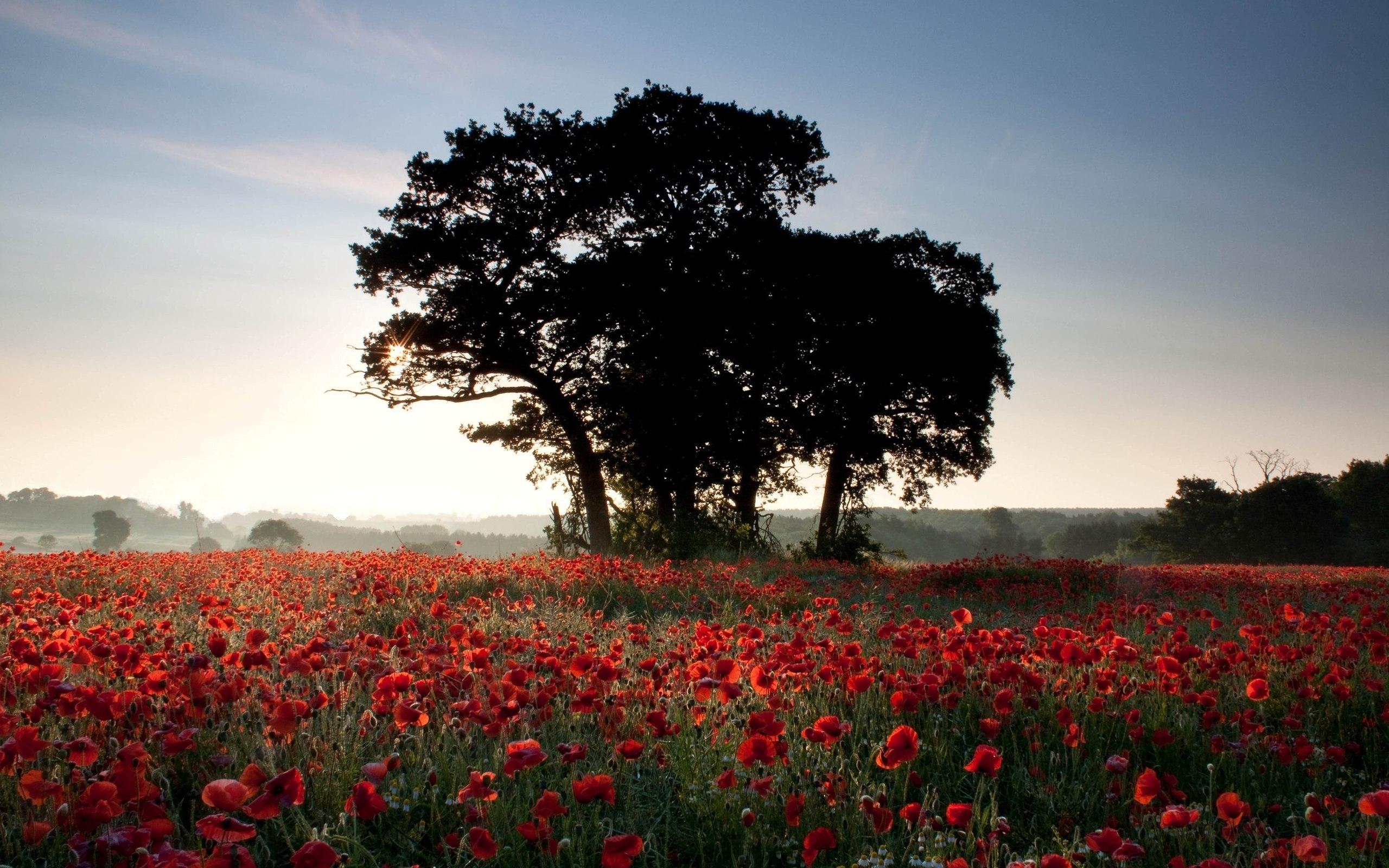 48927 скачать обои Растения, Пейзаж, Природа, Цветы, Деревья, Поля - заставки и картинки бесплатно