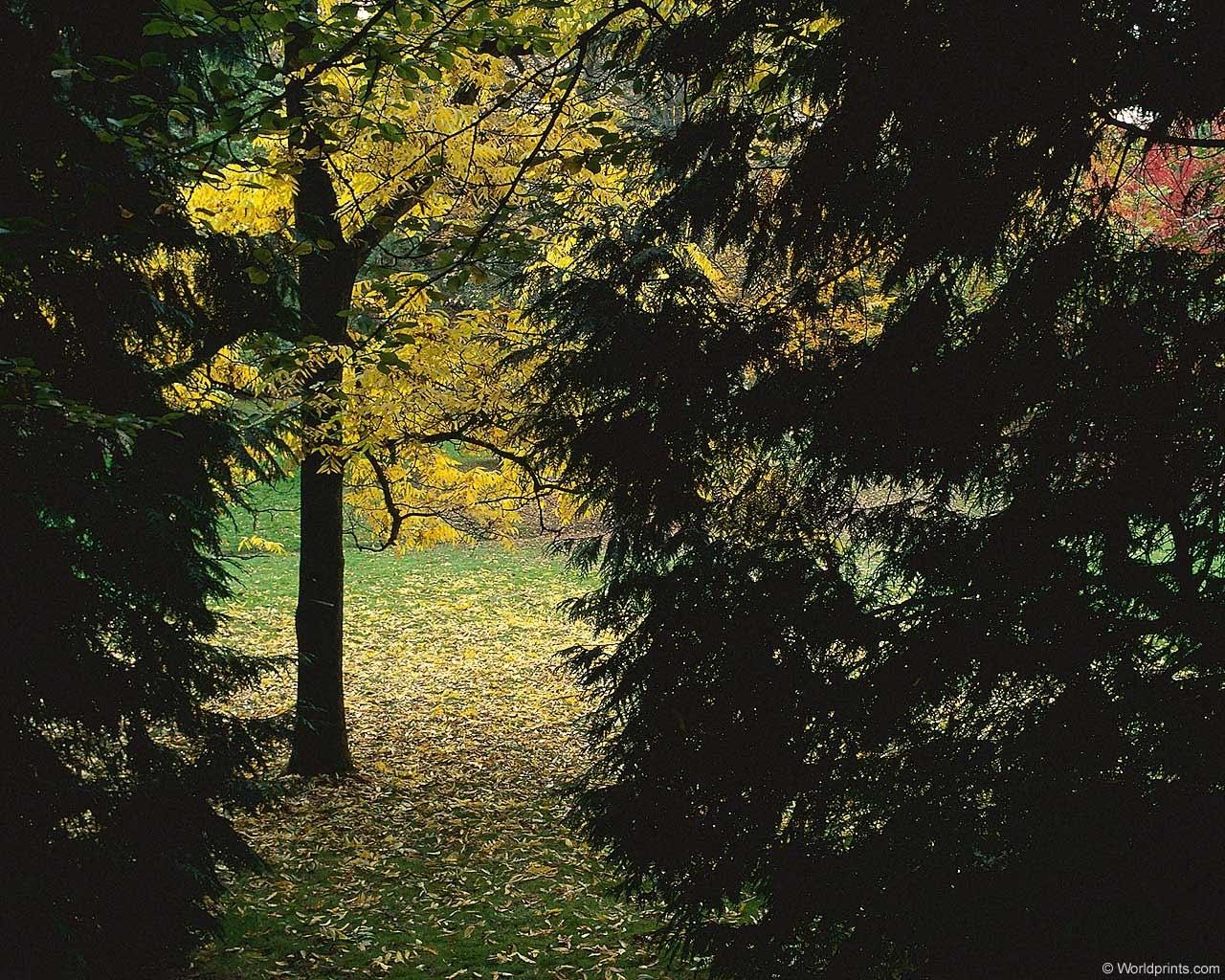 2884 скачать обои Пейзаж, Деревья, Осень - заставки и картинки бесплатно