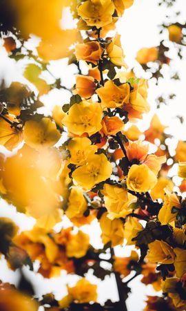 75150 скачать Желтые обои на телефон бесплатно, Цветы, Ветка, Куст, Растение, Цветет Желтые картинки и заставки на мобильный