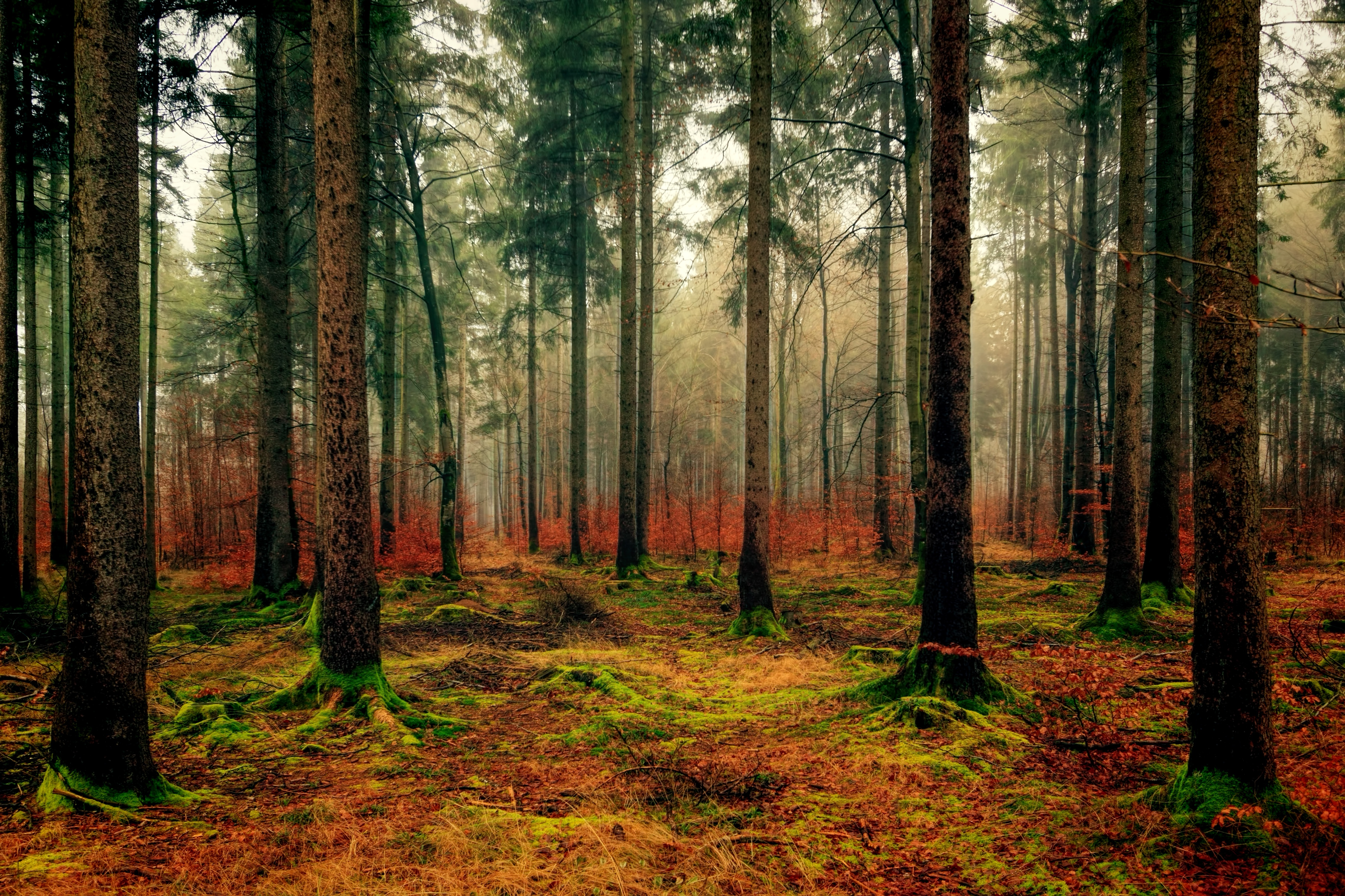 74713 Screensavers and Wallpapers Foliage for phone. Download Nature, Autumn, Forest, Fog, Foliage, Fallen pictures for free