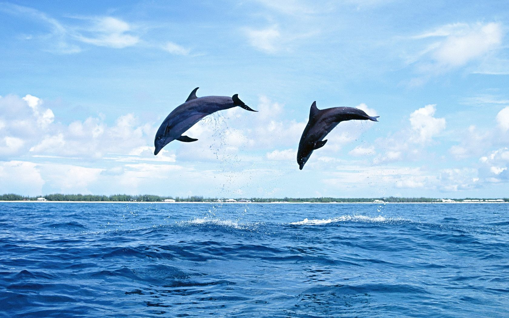 107782 download wallpaper Animals, Dolfins, Sea, Waves, Couple, Pair, Bounce, Jump screensavers and pictures for free