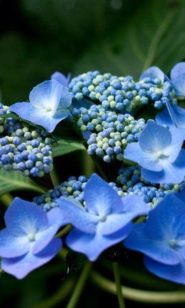 43160 télécharger le fond d'écran Plantes, Fleurs - économiseurs d'écran et images gratuitement