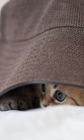 153558 download wallpaper Animals, Kitty, Kitten, Hat, Eyes, Playful screensavers and pictures for free