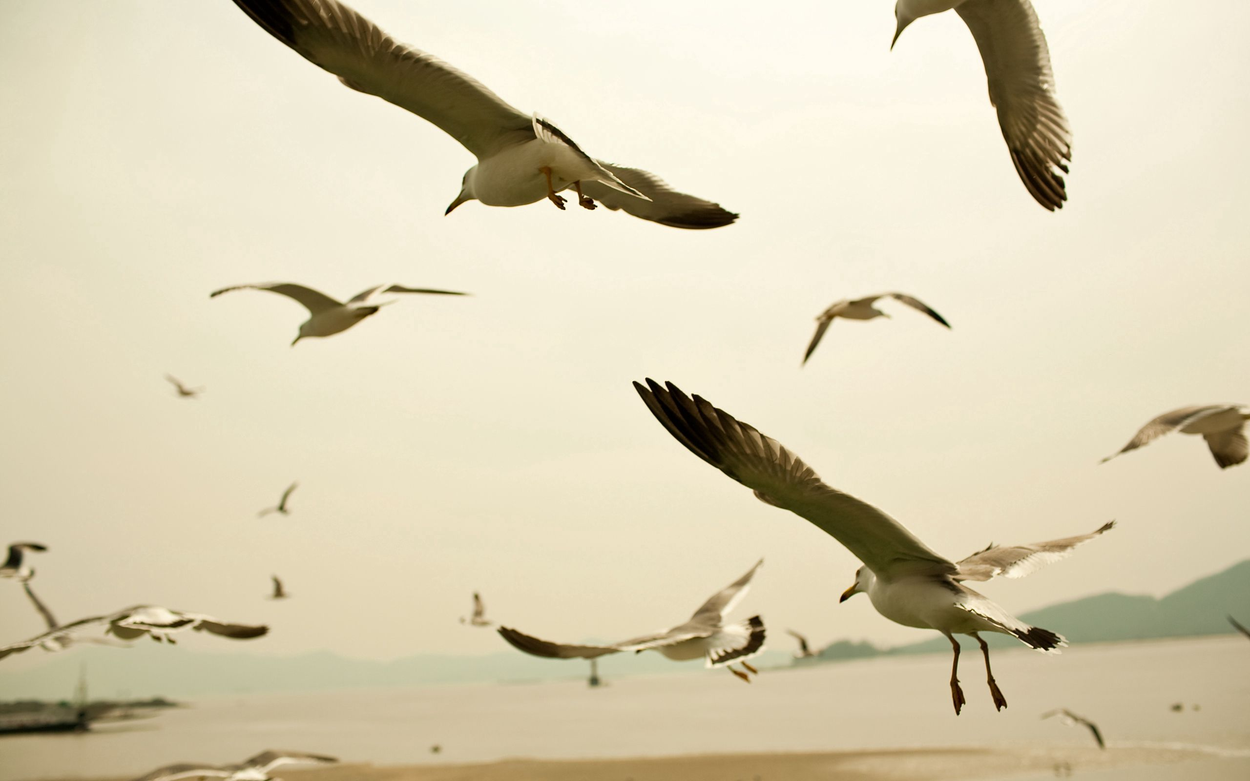 153959 download wallpaper Animals, Sky, Sweep, Wave, Birds, Seagulls screensavers and pictures for free