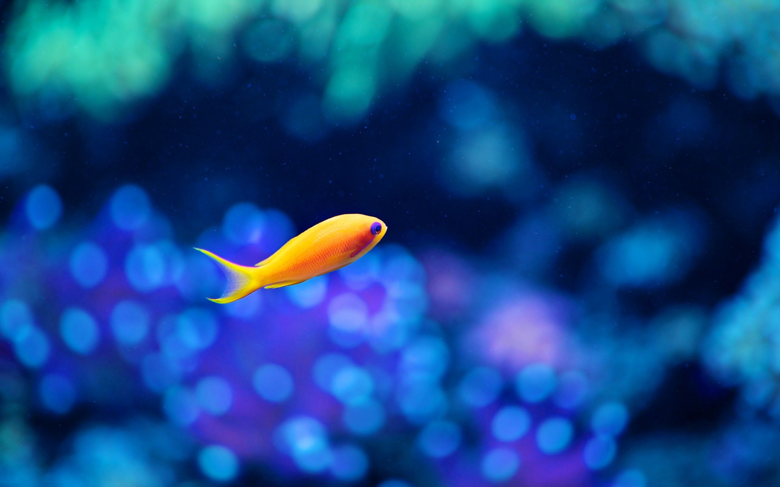 127970 download wallpaper Animals, Small Fish, Fishy, Gold, Golden, To Swim, Swim, Underwater World screensavers and pictures for free