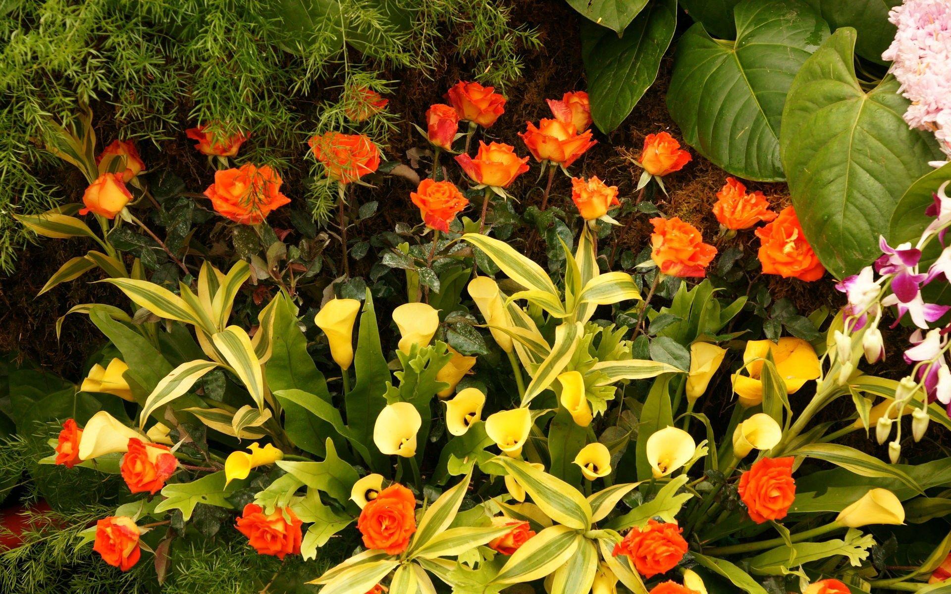 126427 скачать обои Цветы, Каллы, Зелень, Композиция, Розы - заставки и картинки бесплатно