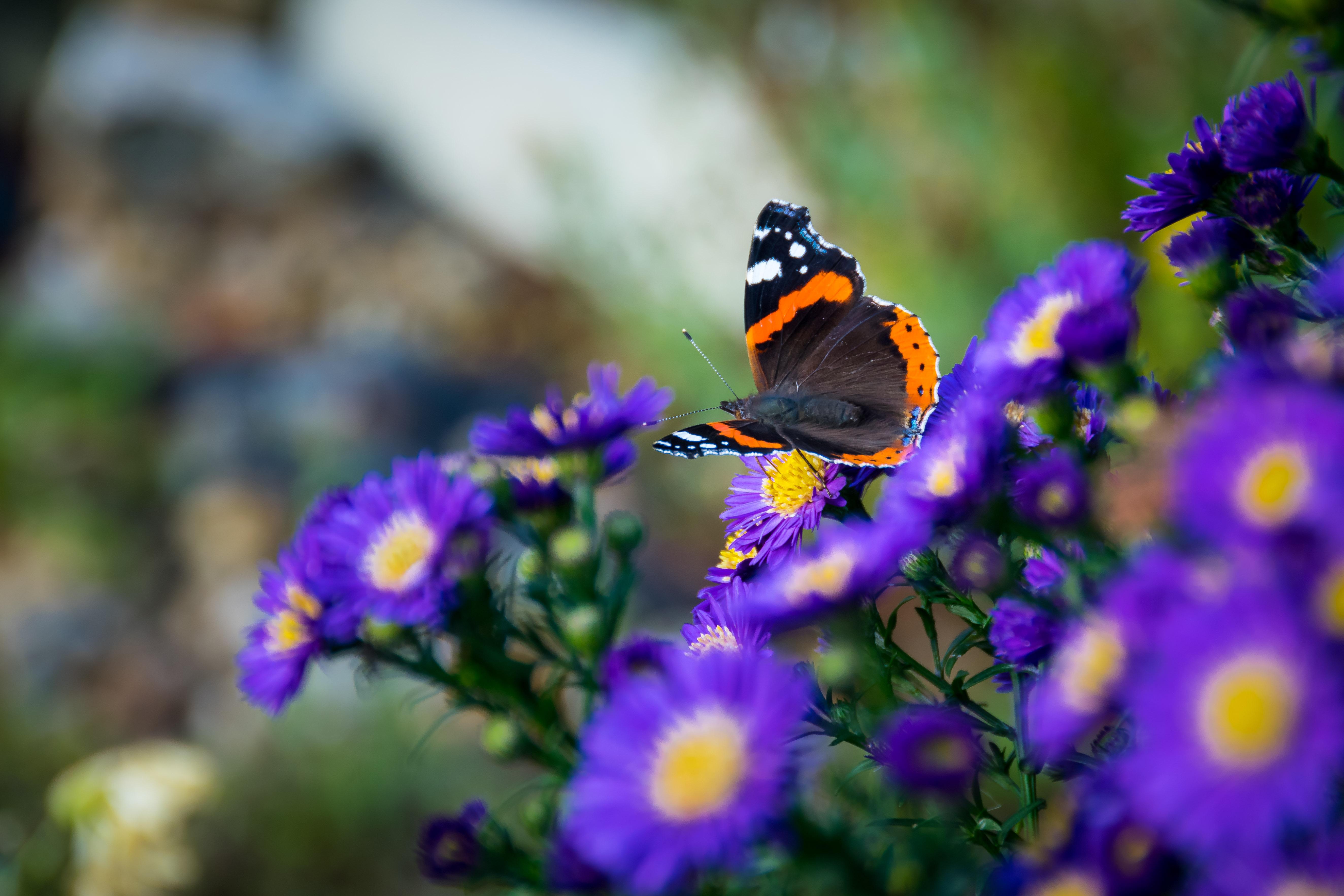手機的120027屏保和壁紙昆虫。 免費下載 宏, 蝴蝶, 翅膀, 昆虫, 花卉 圖片