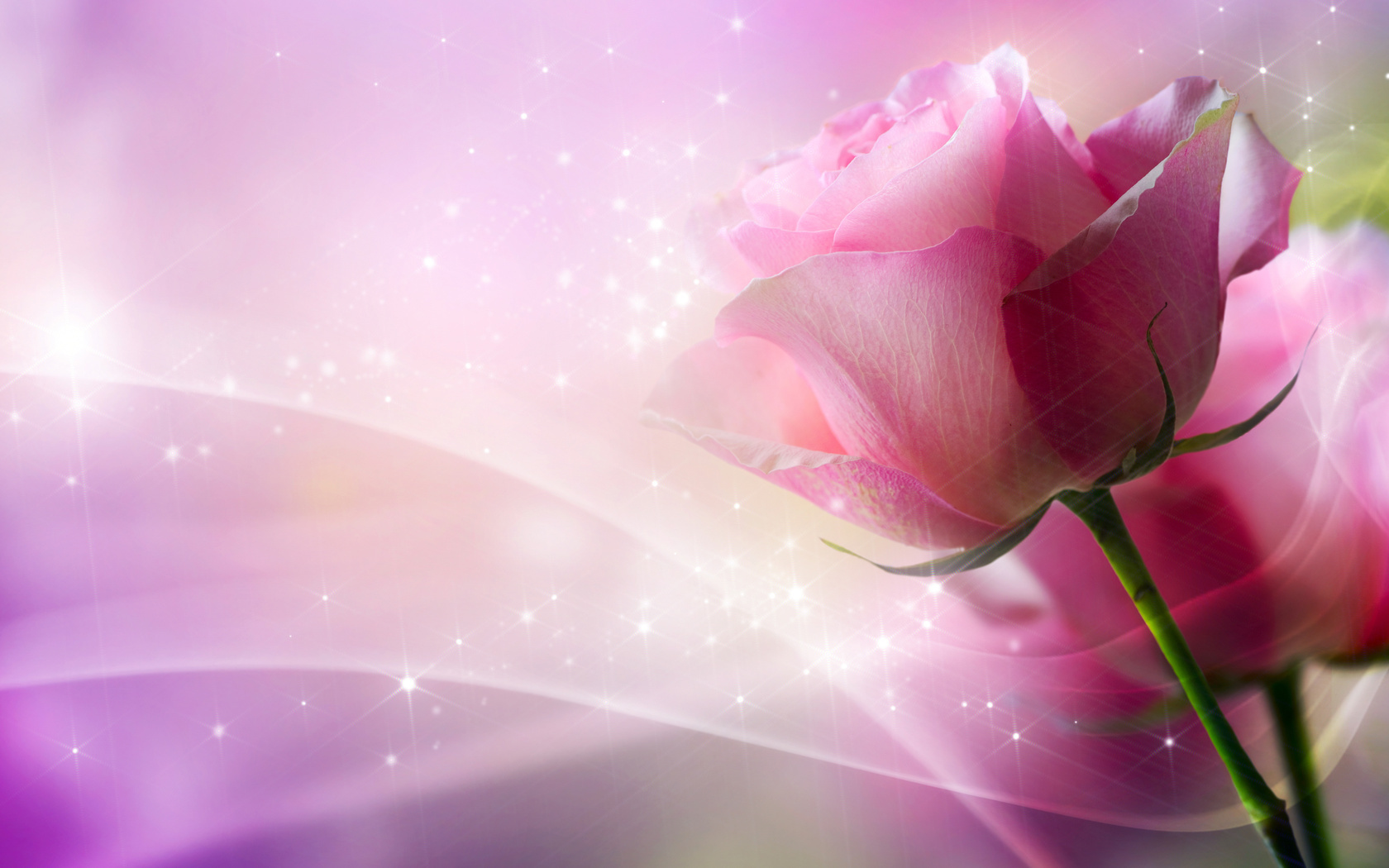 37805 скачать обои Растения, Розы, Цветы - заставки и картинки бесплатно