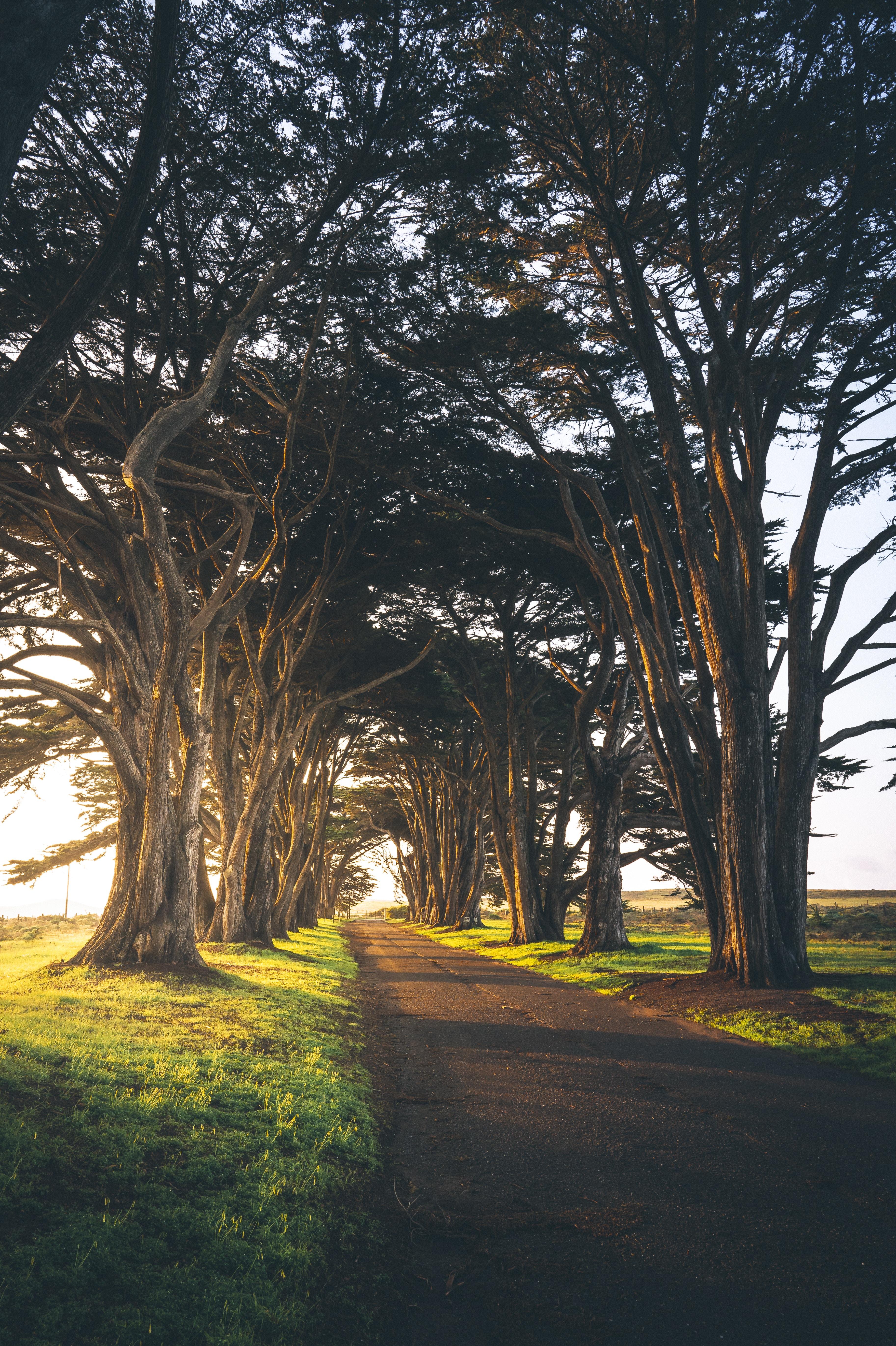 86092 Hintergrundbild 720x1280 kostenlos auf deinem Handy, lade Bilder Natur, Bäume, Grüne, Grünen, Gasse, Morgen, Spur, Track, Leer 720x1280 auf dein Handy herunter