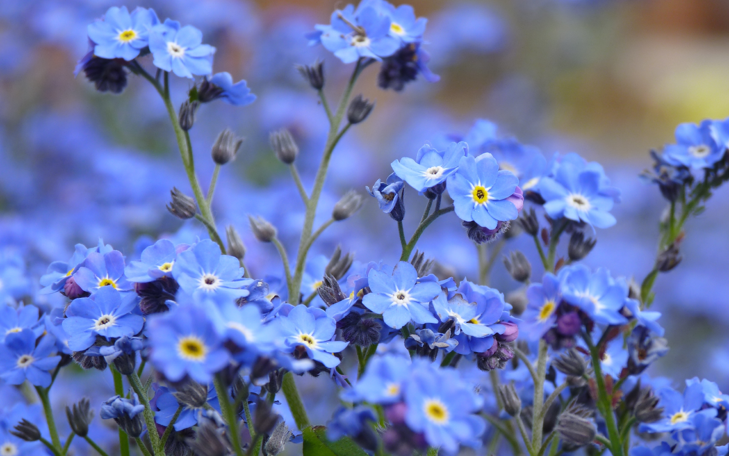 33756 download wallpaper Flowers, Plants screensavers and pictures for free