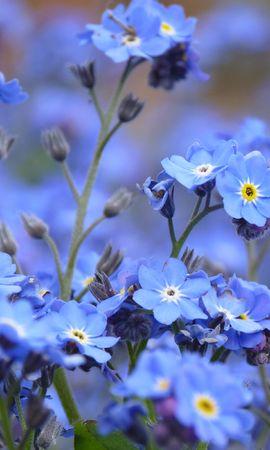 33756 скачать обои Растения, Цветы - заставки и картинки бесплатно