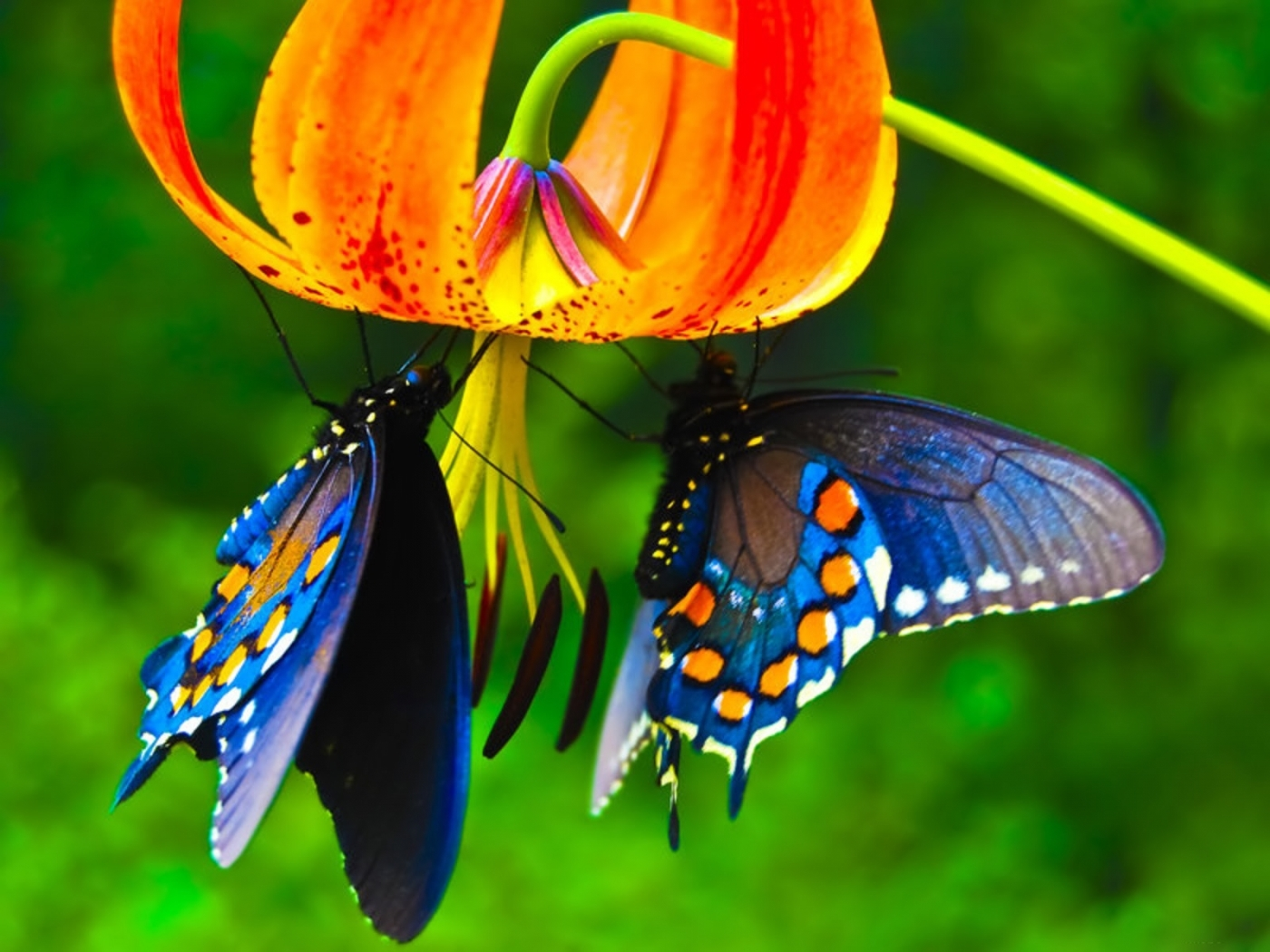25595 download wallpaper Insects, Butterflies, Plants, Flowers screensavers and pictures for free