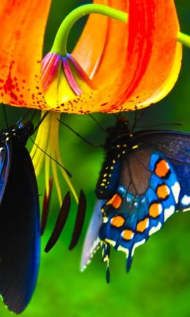 25595 Screensavers and Wallpapers Insects for phone. Download Plants, Butterflies, Flowers, Insects pictures for free