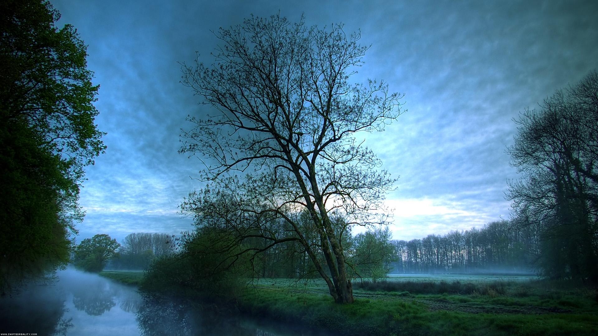 48122 télécharger le fond d'écran Paysage, Nature, Arbres - économiseurs d'écran et images gratuitement