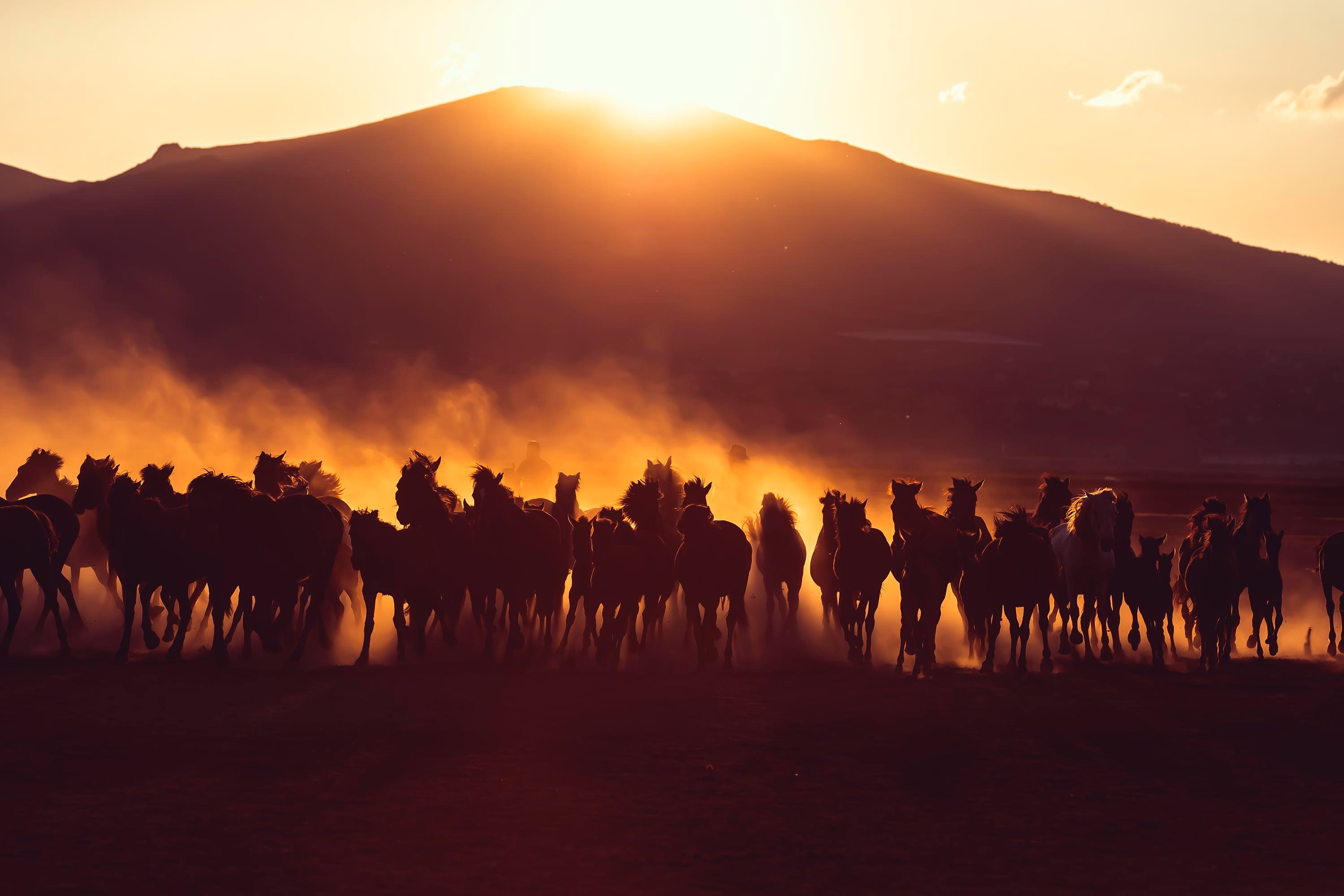 51069 download wallpaper Horses, Animals, Sunset, Dark, Dust, Herd screensavers and pictures for free