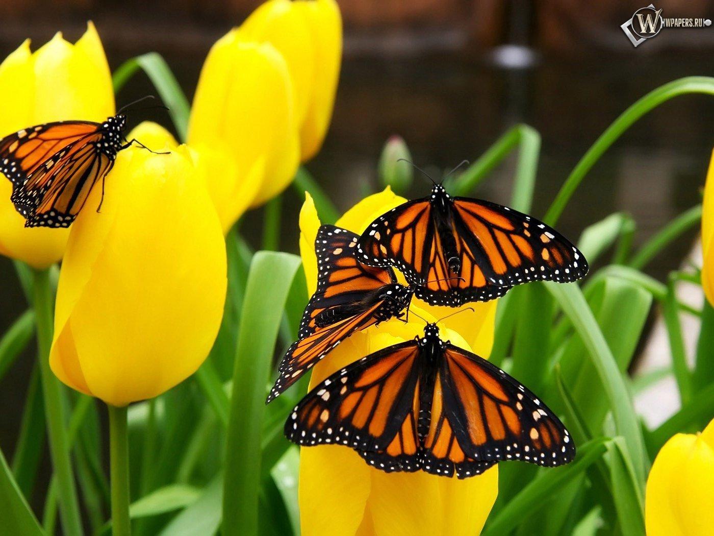 12212 скачать обои Бабочки, Насекомые - заставки и картинки бесплатно