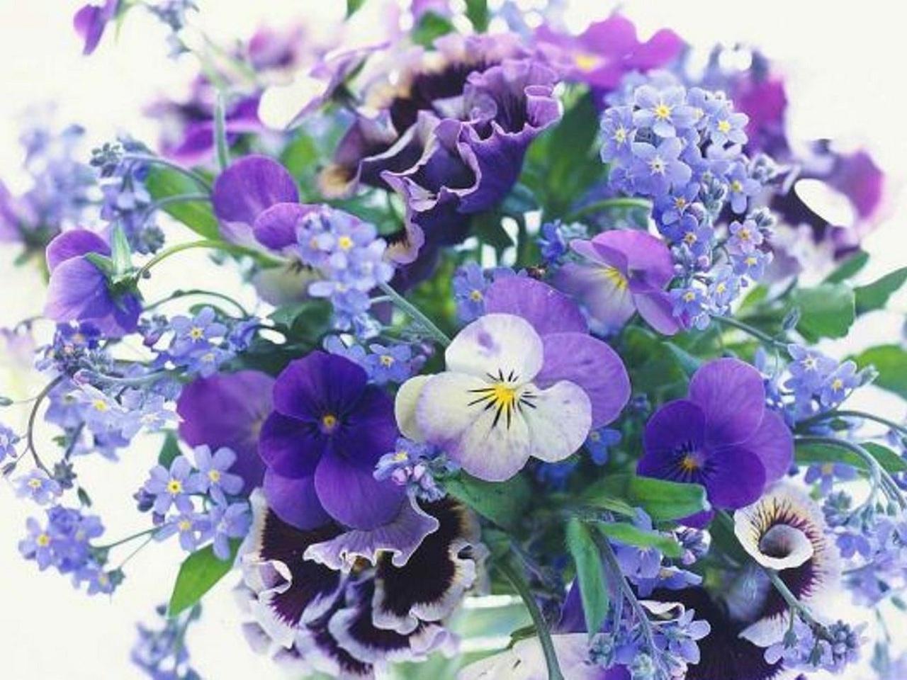 25708 скачать обои Растения, Цветы - заставки и картинки бесплатно