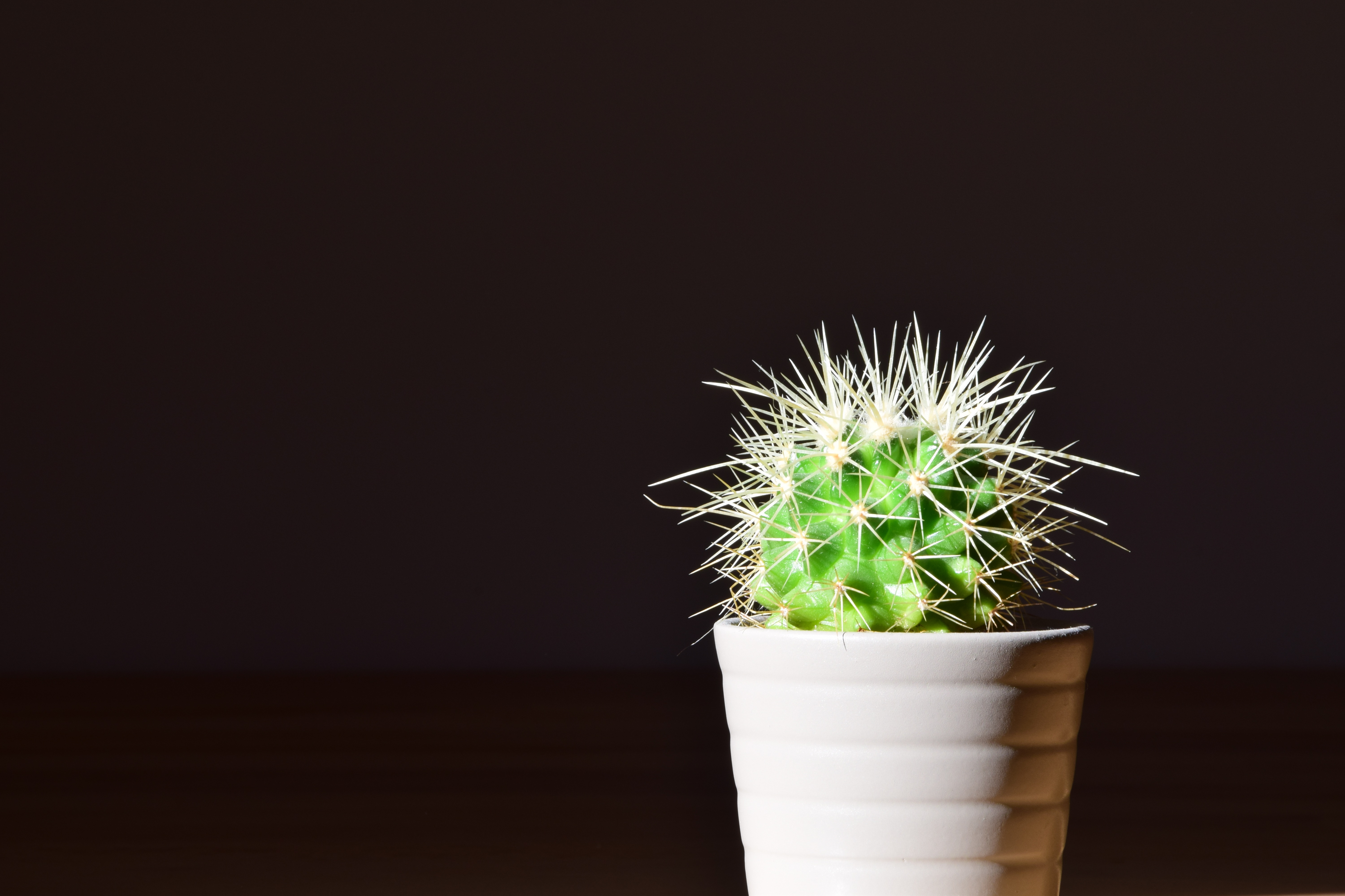 Best Cactus wallpapers for phone screen