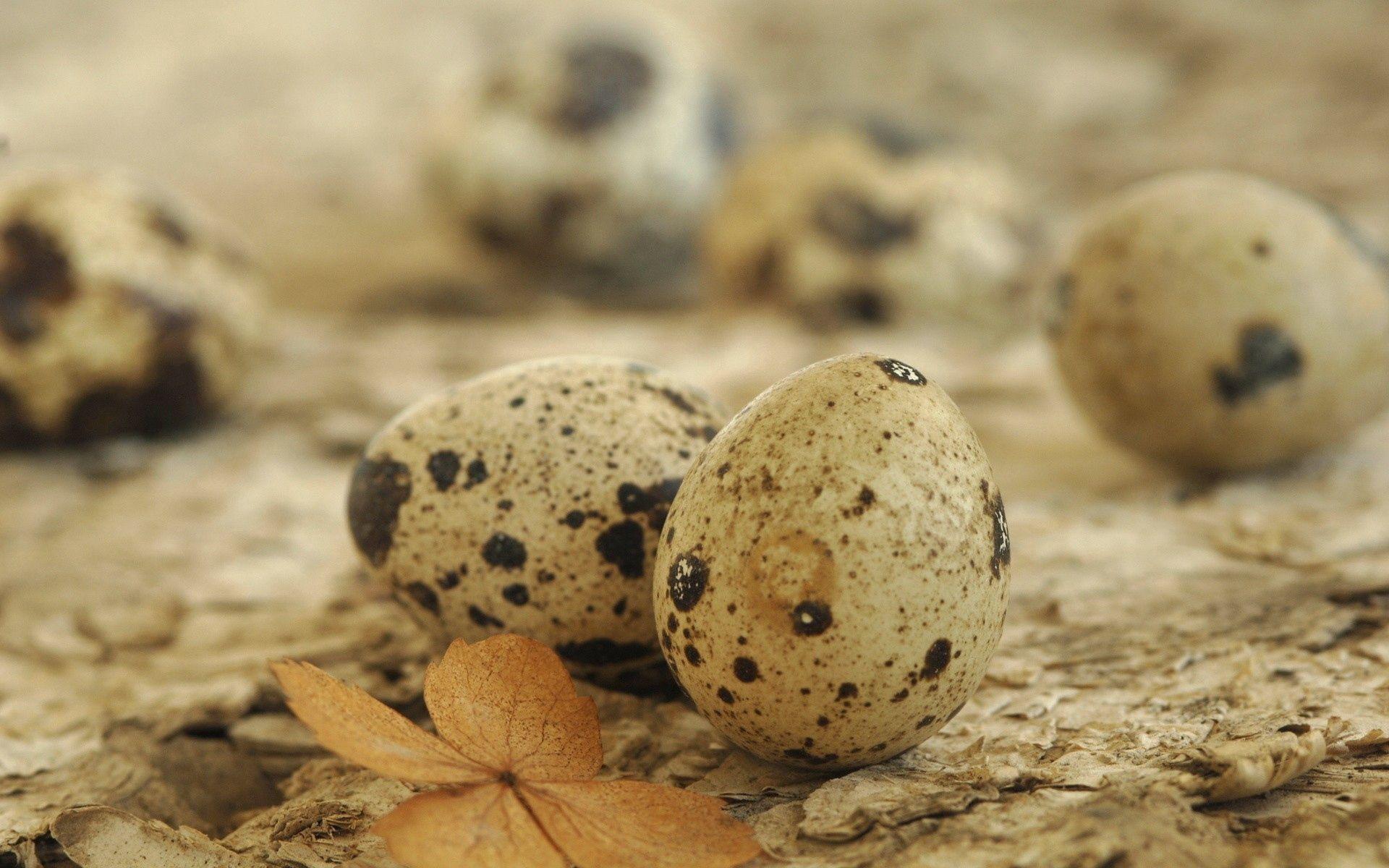 154348 Заставки и Обои Яйца на телефон. Скачать Яйца, Разное, Пятнистый, Лист, Перепелиный картинки бесплатно