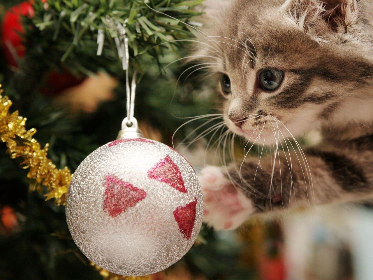41754 скачать обои Кошки (Коты, Котики), Новый Год (New Year), Животные - заставки и картинки бесплатно