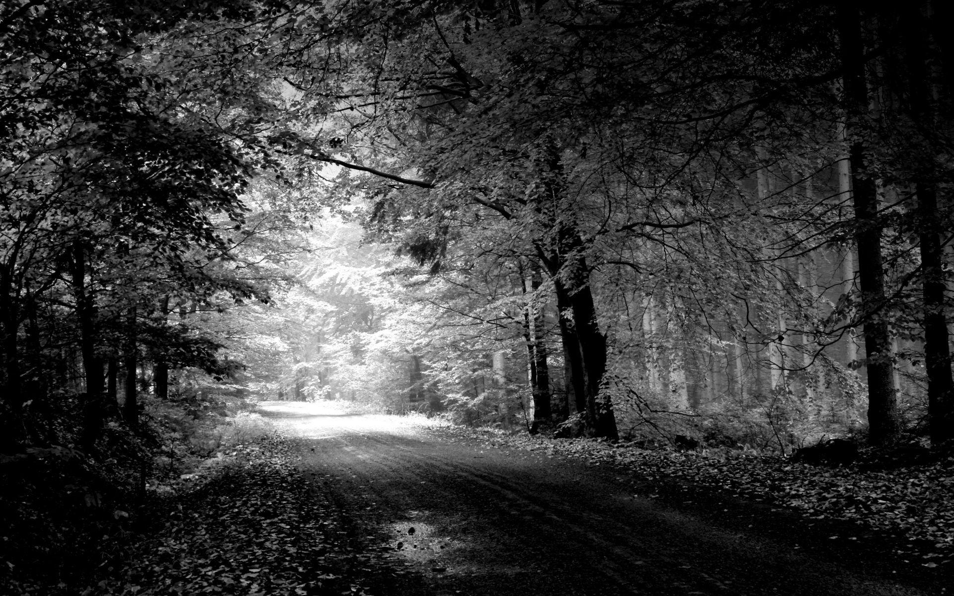 83335 baixar papel de parede Natureza, Estrada, Caminho, Outono, Preto E Branco, Árvores, Poça - protetores de tela e imagens gratuitamente