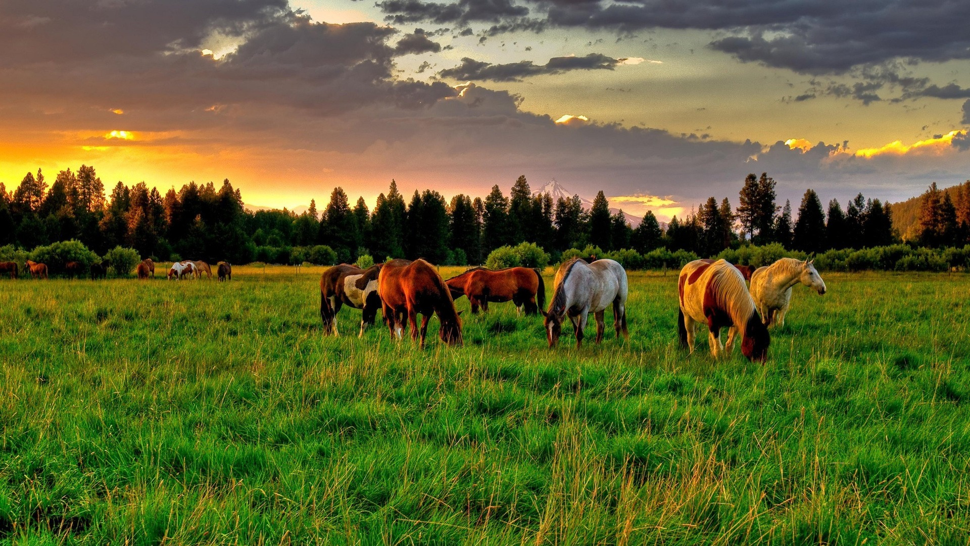 40300 download wallpaper Horses, Animals screensavers and pictures for free