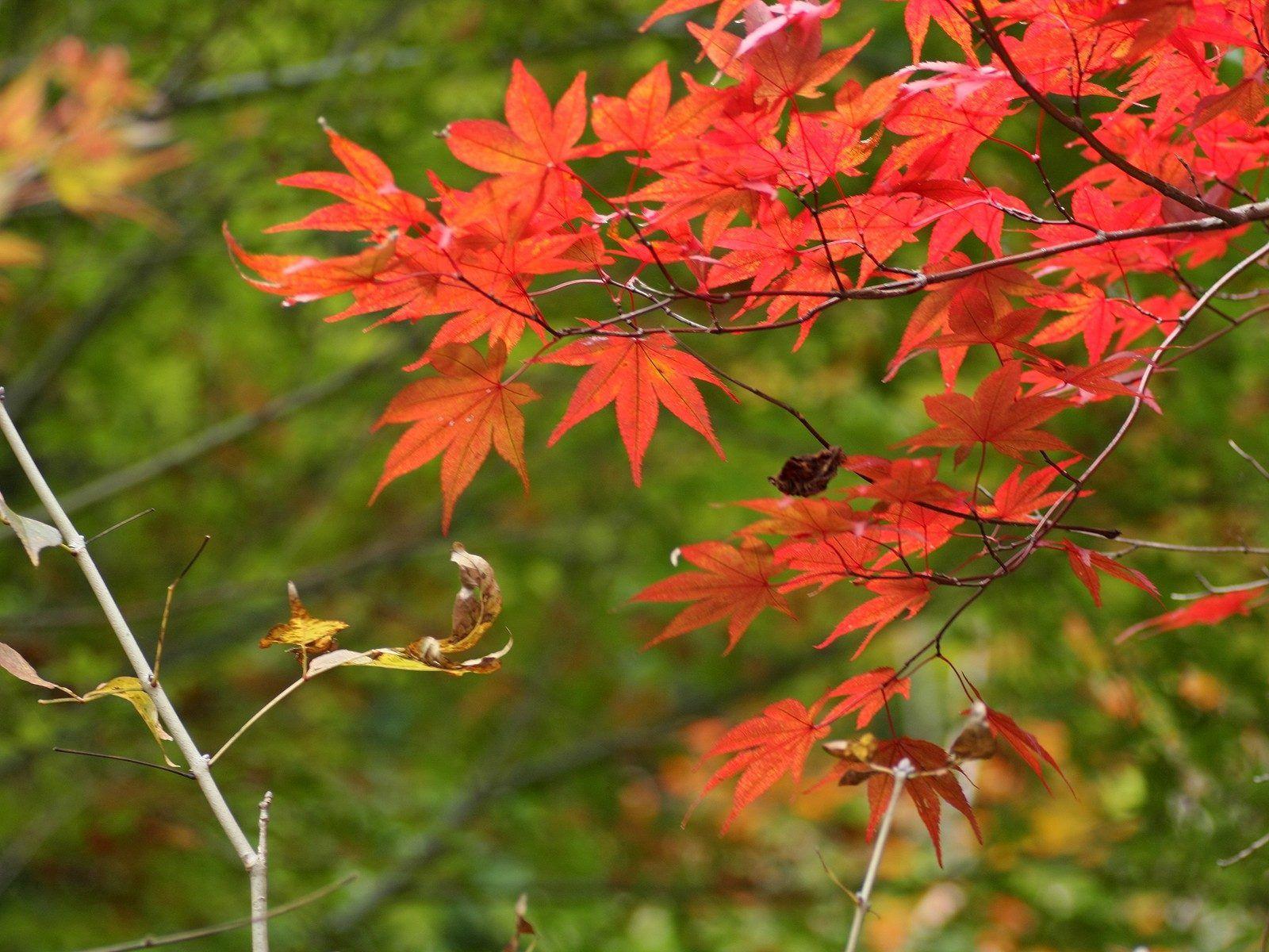 86580 скачать обои Природа, Ветки, Листья, Осень - заставки и картинки бесплатно