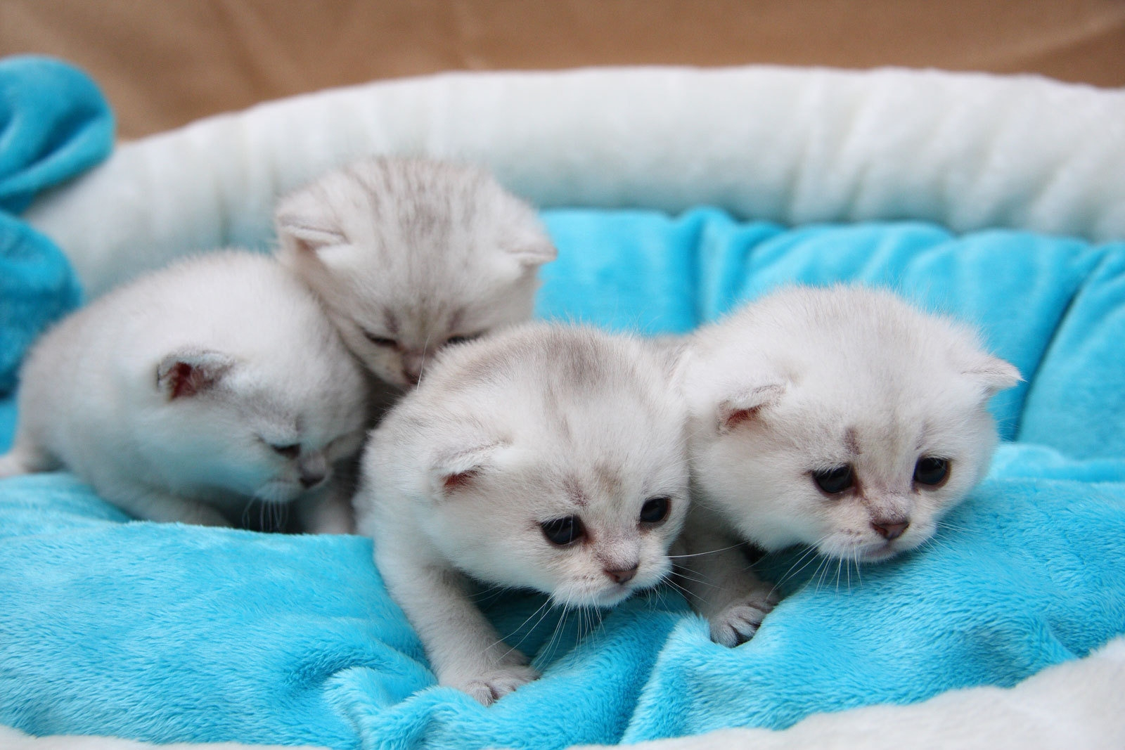 67792 Screensavers and Wallpapers Kittens for phone. Download Animals, To Lie Down, Lie, Toddlers, Kids, Small, Kittens pictures for free