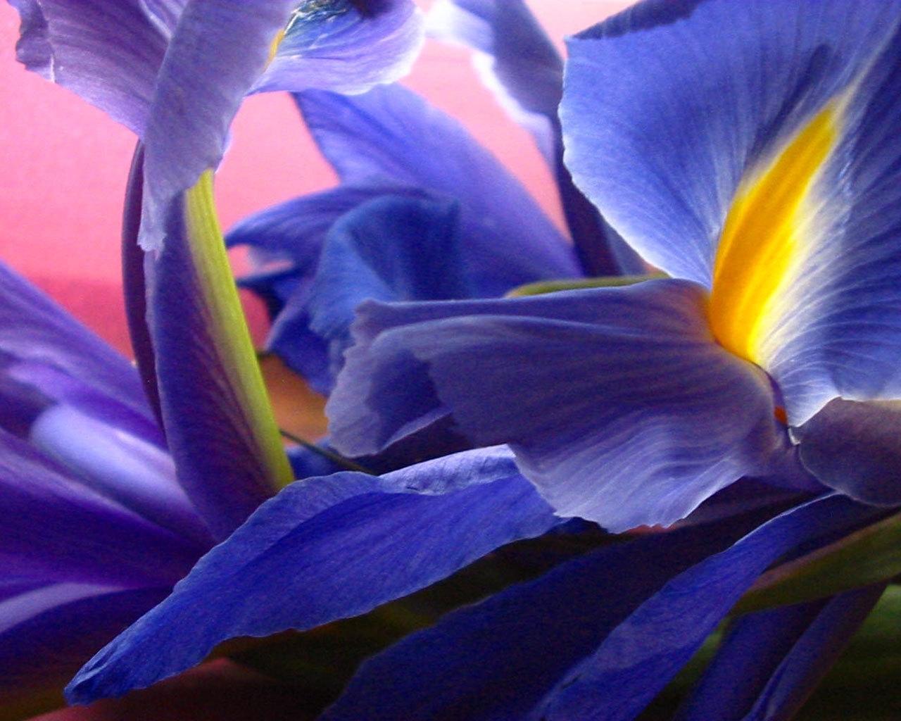 10103 descargar fondo de pantalla Plantas, Flores: protectores de pantalla e imágenes gratis