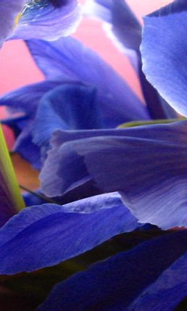 10103 скачать обои Растения, Цветы - заставки и картинки бесплатно
