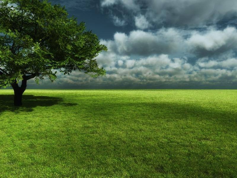 44456 скачать обои Пейзаж, Природа, Деревья - заставки и картинки бесплатно